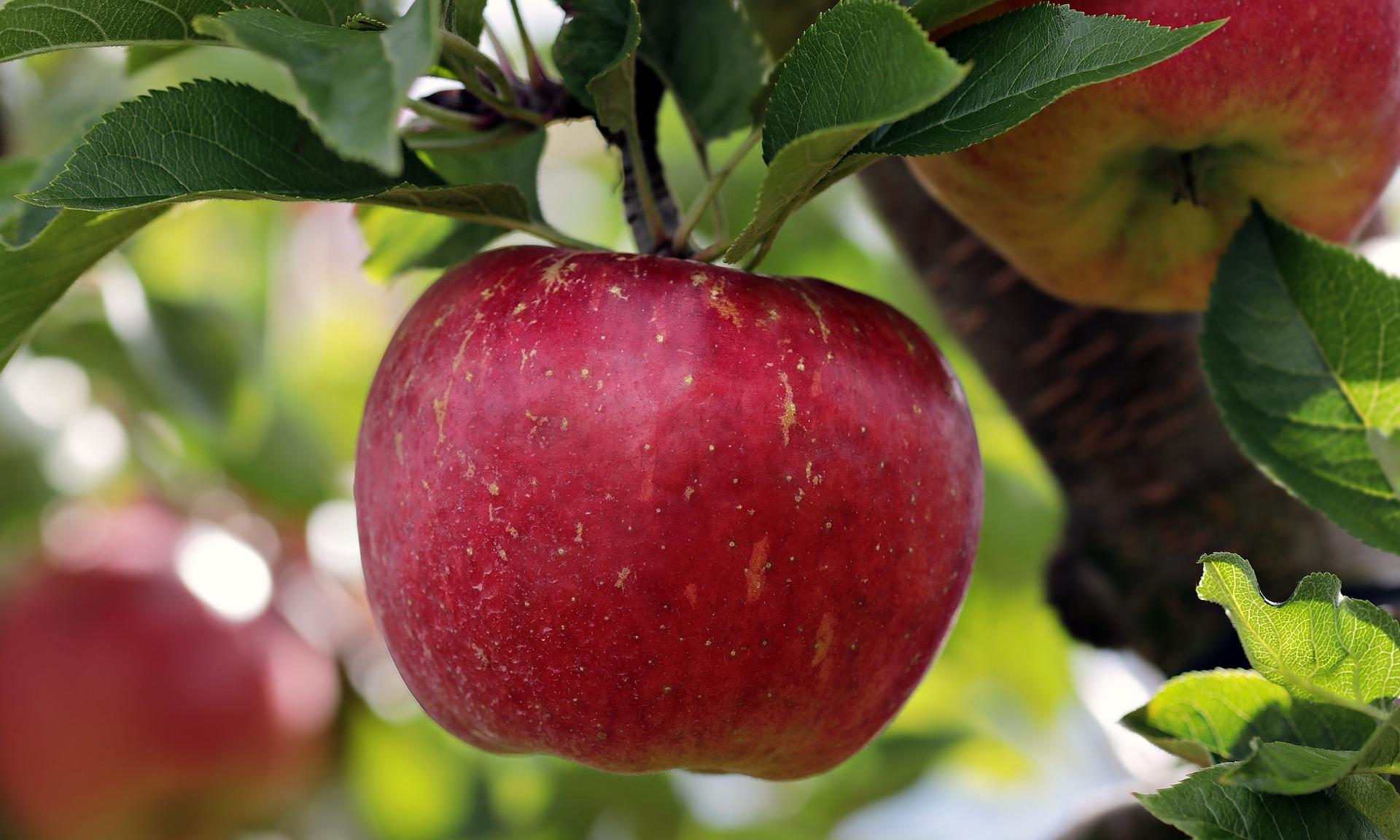 alimentos anticancerígenos manzana